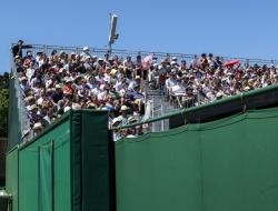 Wimbledon-Tenis-1906 - Ross Vincent Photography